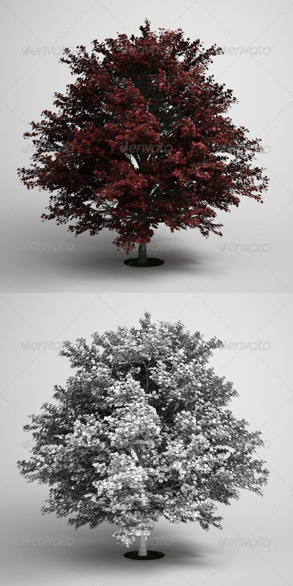 CGAxis Tree Red Maple 05 - 3DOcean Item for Sale