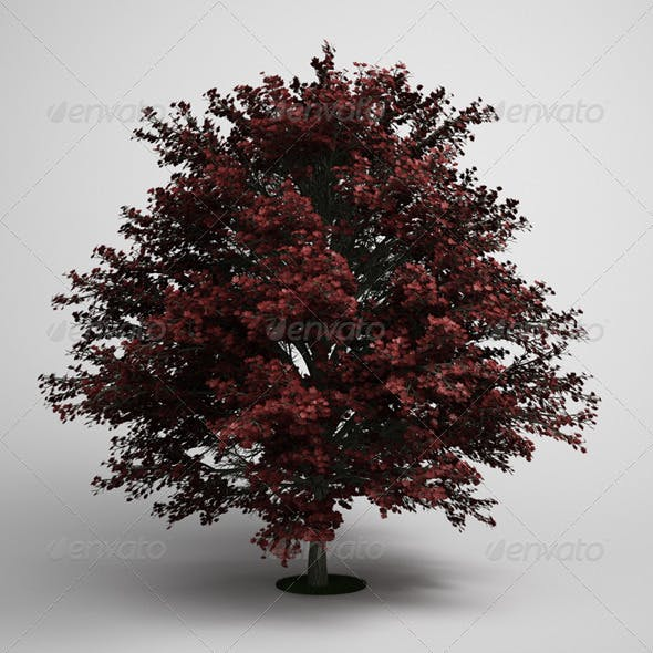 CGAxis Tree Red Maple 05