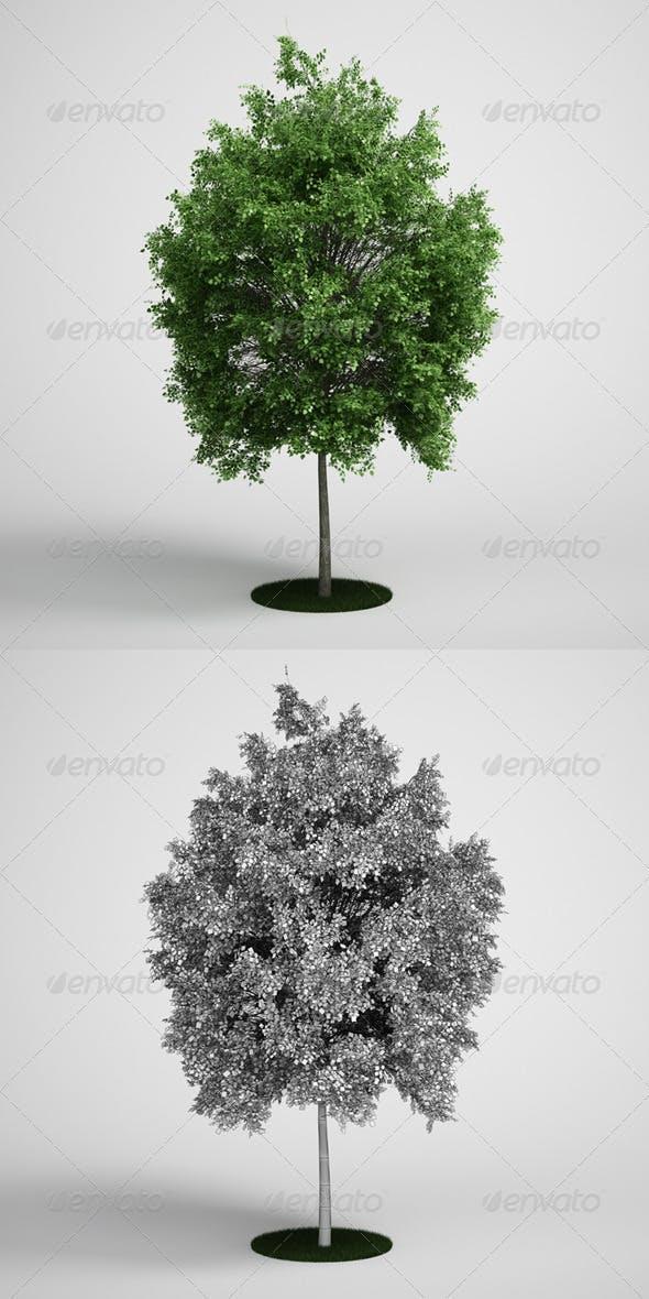 CGAxis Tree Deciduous 07 - 3DOcean Item for Sale