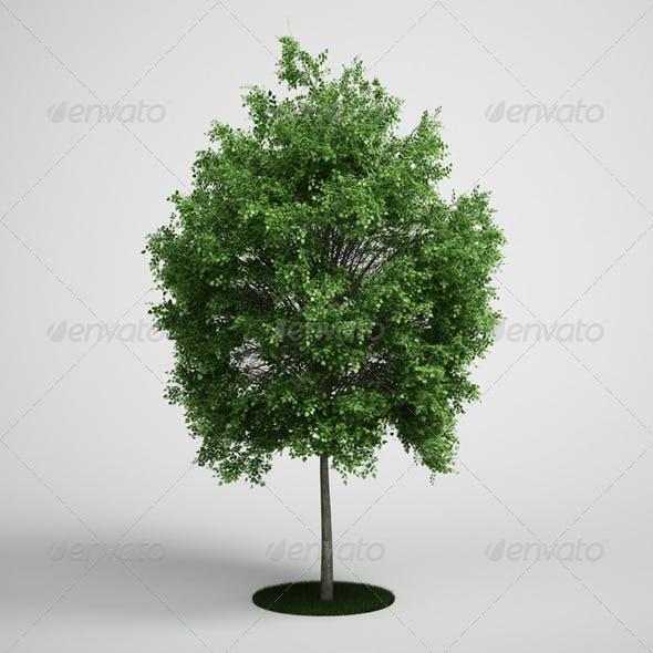 CGAxis Tree Deciduous 07