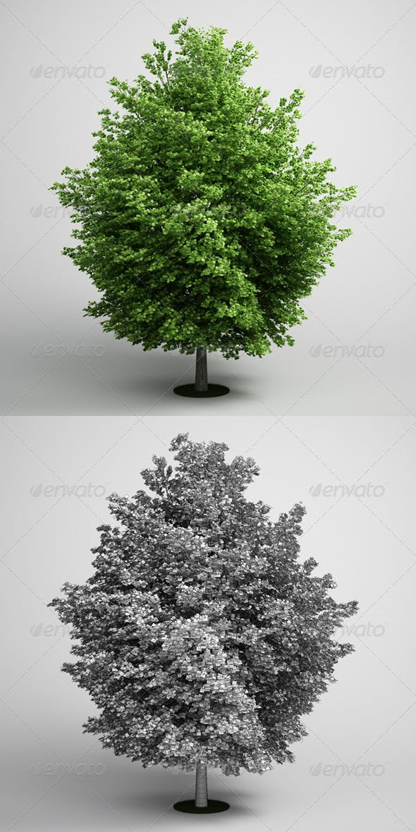 CGAxis Maple Tree 08 - 3DOcean Item for Sale