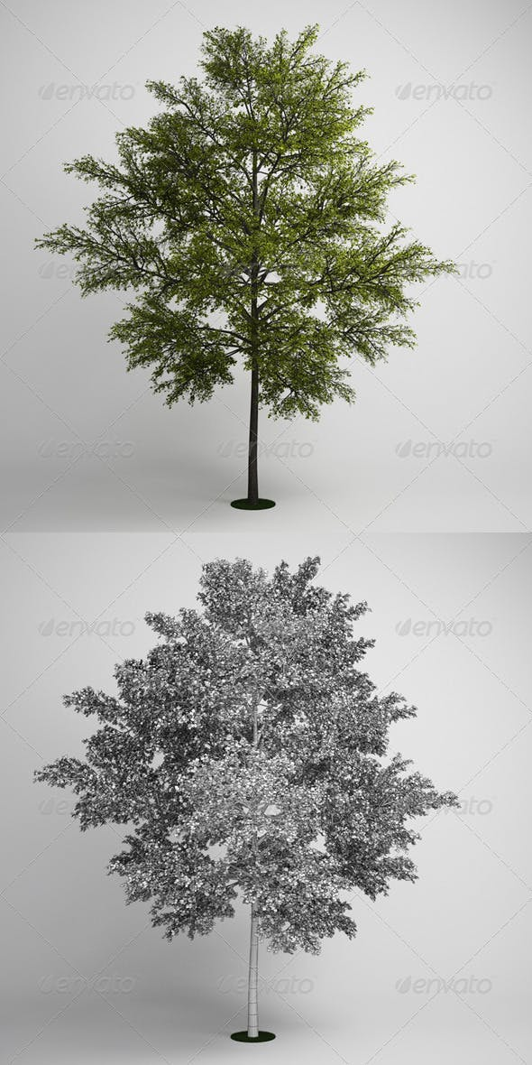 CGAxis Tree 10 - 3DOcean Item for Sale