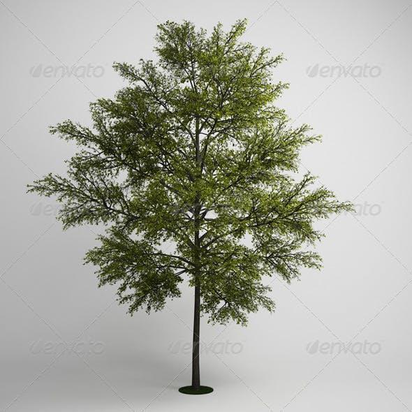 CGAxis Tree 10