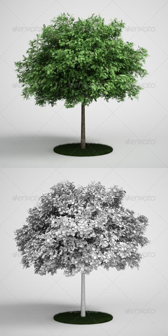 CGAxis Tree Black Locust 11 - 3DOcean Item for Sale