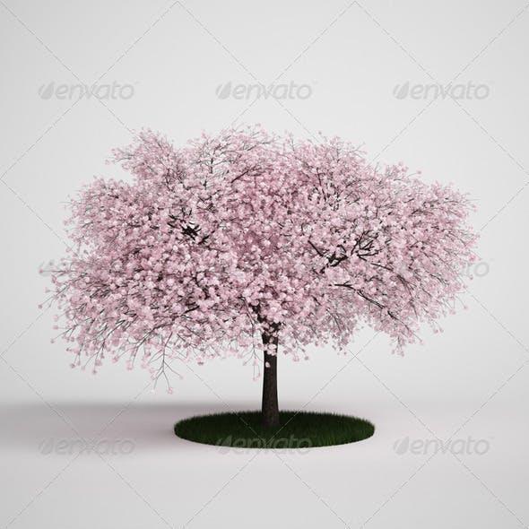 CGAxis Flowering Tree 12