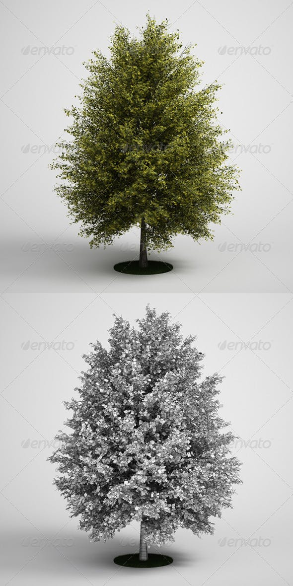 CGAxis Tall Tree Ginkgo 13 - 3DOcean Item for Sale
