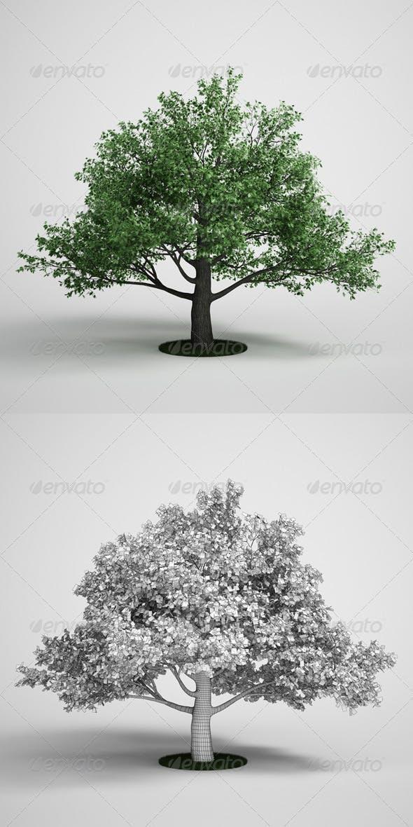 CGAxis Oak Tree 15 - 3DOcean Item for Sale