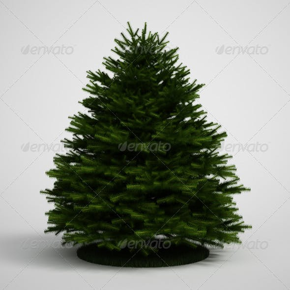 CGAxis Evergreen Tree Fir 20