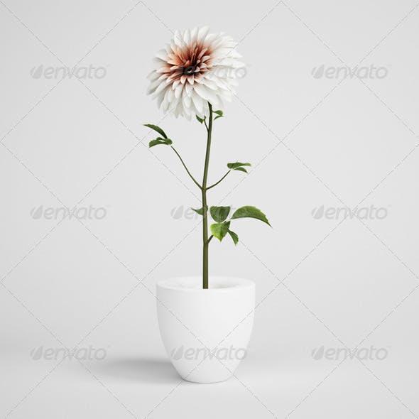 CGAxis Flower in Vase 18