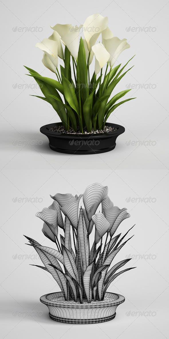CGAxis Calla Lilies in Planter Pot 22 - 3DOcean Item for Sale