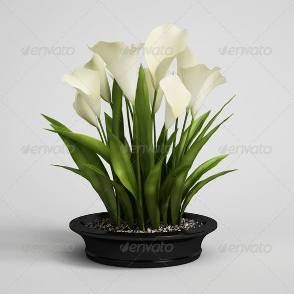CGAxis Calla Lilies in Planter Pot 22