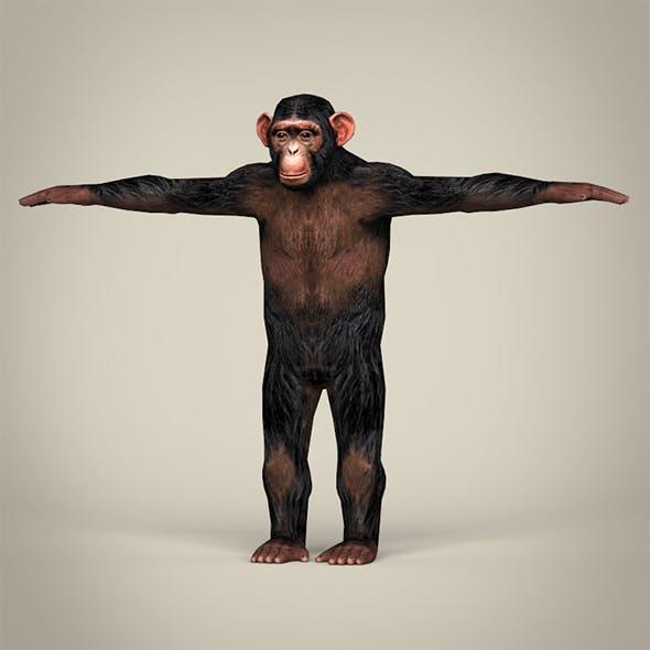 Low Poly Realistic Chimpanzee