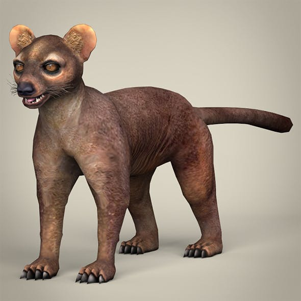 Low Poly Realistic Fossa
