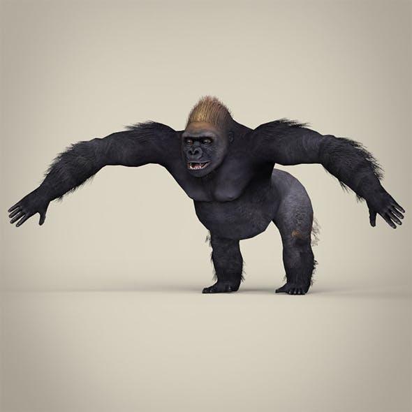 Low Poly Realistic Gorilla