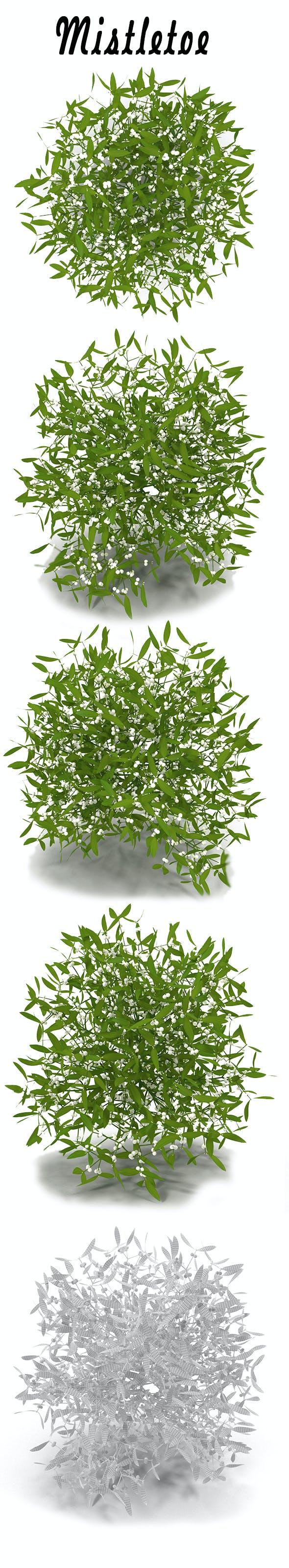 Mistletoe - 3DOcean Item for Sale
