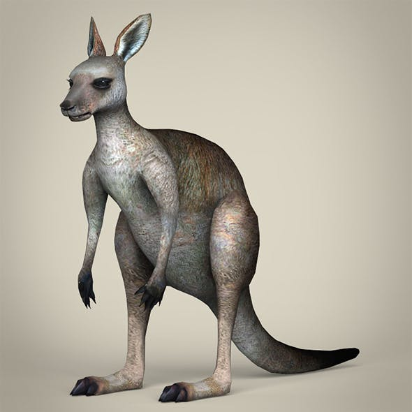 Low Poly Realistic Kangaroo
