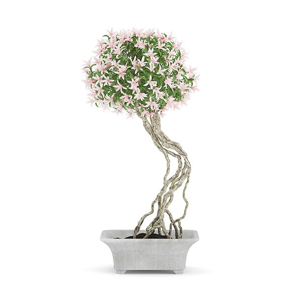 Flowering Tree in Concrete Pot - 3DOcean Item for Sale