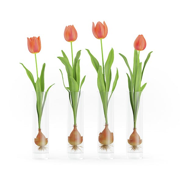 Four Tulips in Glasses - 3DOcean Item for Sale