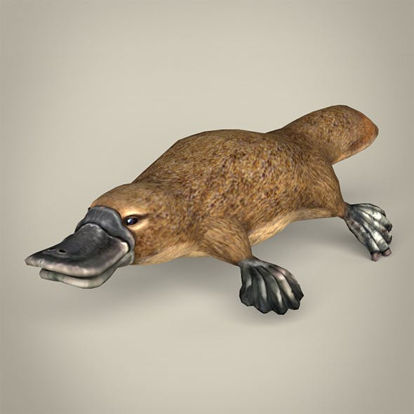 Low Poly Realistic Platypus