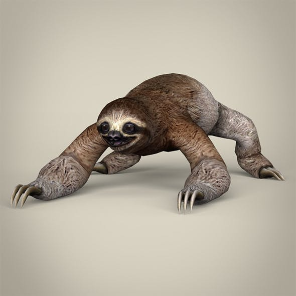 Low Poly Realistic Sloth - 3DOcean Item for Sale