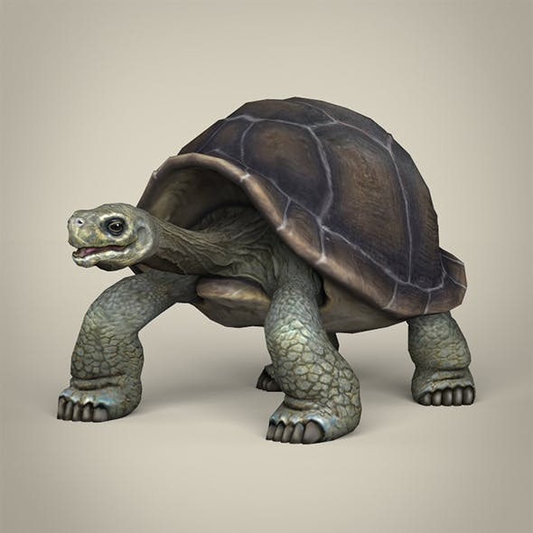 Low Poly Realistic Tortoise