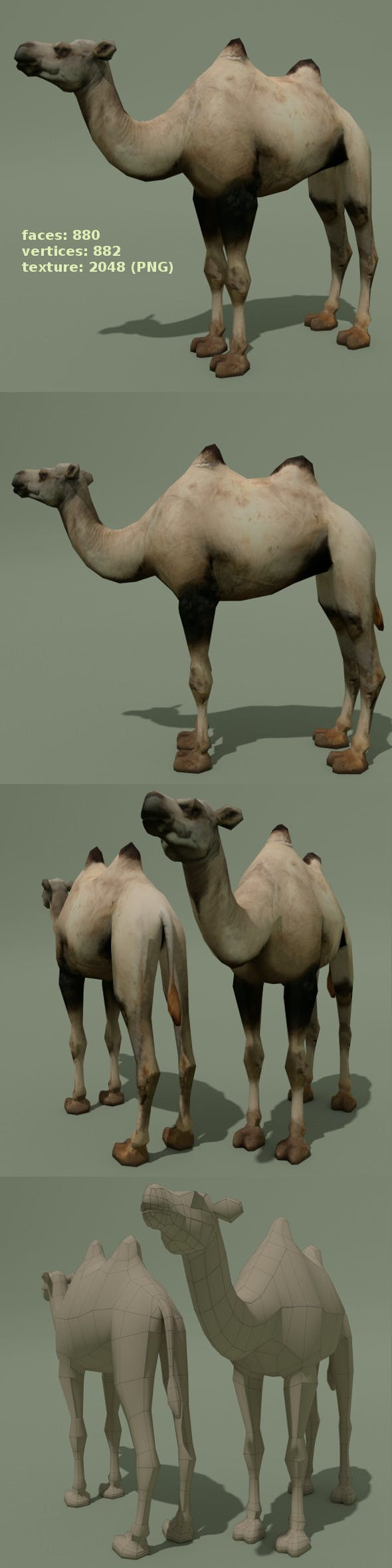 Low Poly Camel - 3DOcean Item for Sale
