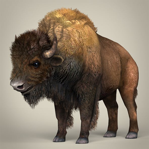 Low Poly Realistic Montana Buffalo