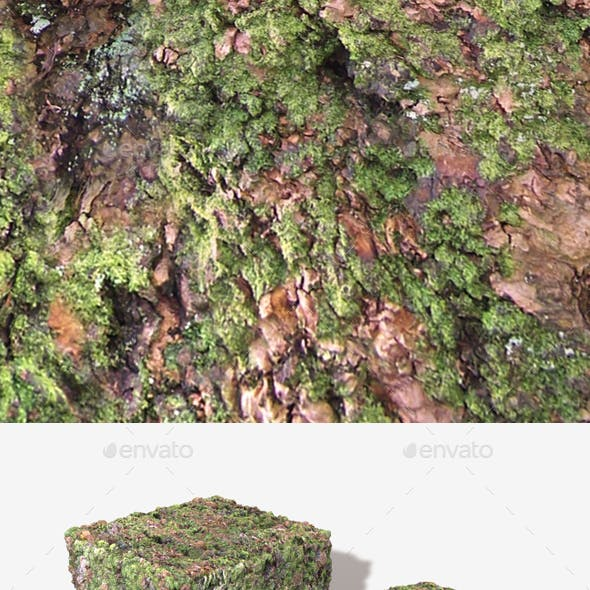 Thick Mossy Bark Seamless Texture 02