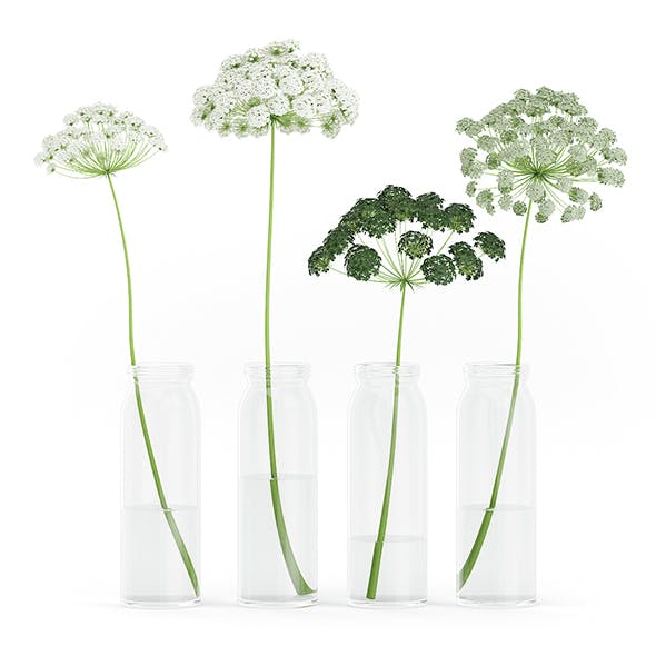 Wild Carrot Flowers in Glass Jars - 3DOcean Item for Sale