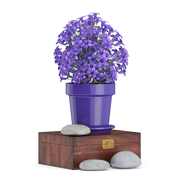 Purple Flowes on Wooden Box