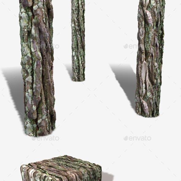 Bark Moss Seamless Texture