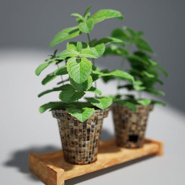 Mint - 3DOcean Item for Sale