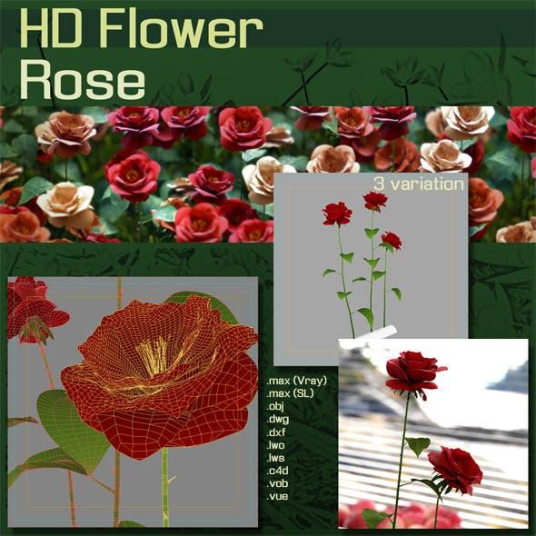 HD Flower :  Roses - 3DOcean Item for Sale