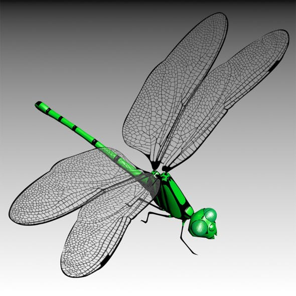 Dragonfly - 3DOcean Item for Sale