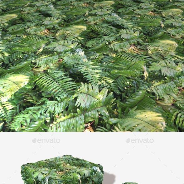 Jungle Background Fern Seamless Texture