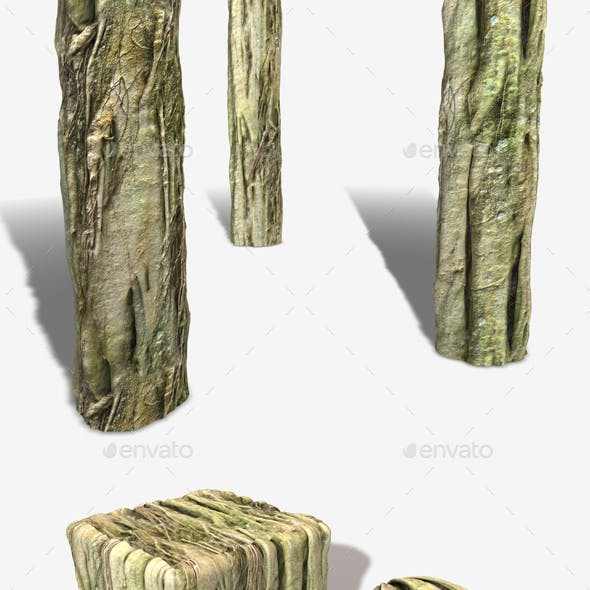 Swamp Tree Roots Seamless Texture