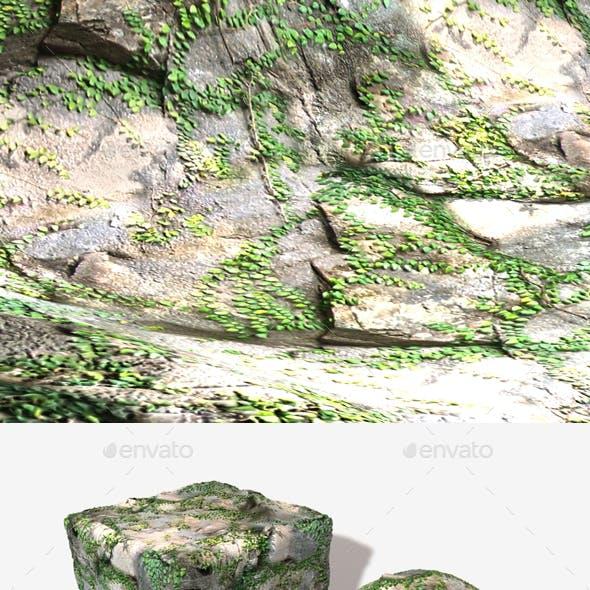 Vine Rocks Seamless Texture
