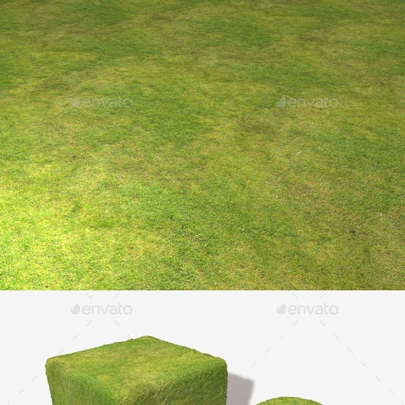 Grass High View Seamless Texture