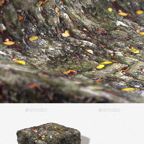 Wet Leafy Rock Seamless Texture