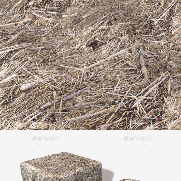 Dead Beach Grass Seamless Texture