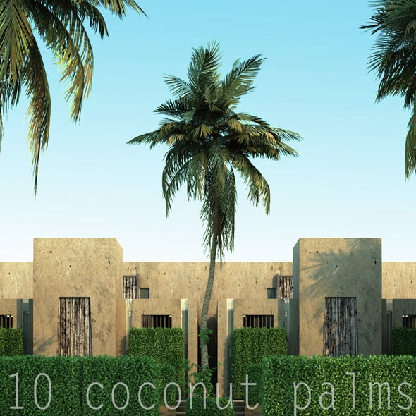 10 coconuts trees