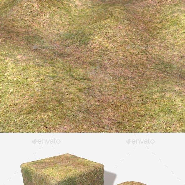 Dry Grass Birds Eye View Seamless Texture
