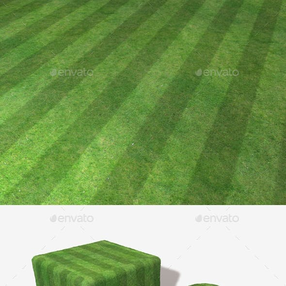 Striped High Angle Grass Seamless Texture