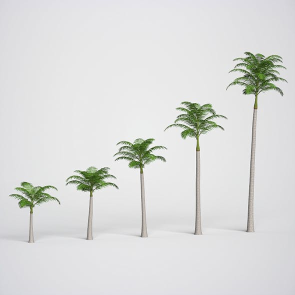 Realistic Plams Tree Collection - 3DOcean Item for Sale