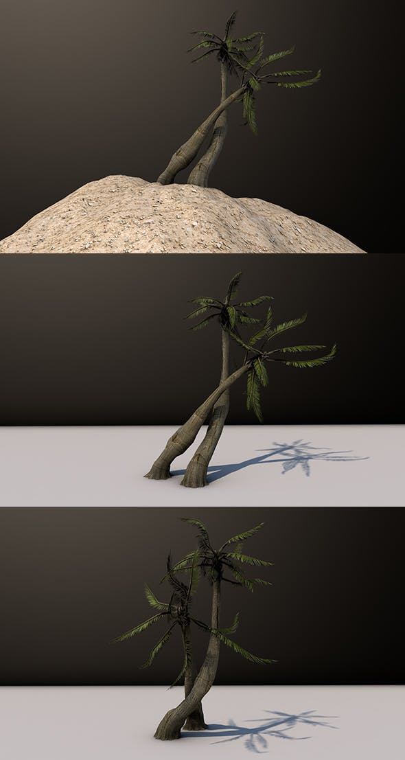 Beach Palm Tree - 3DOcean Item for Sale