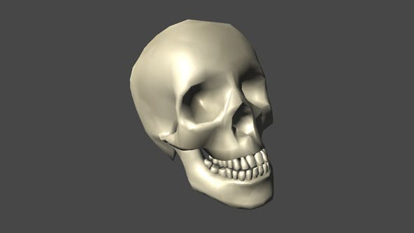 Low Poly Skull for Game - 3DOcean Item for Sale