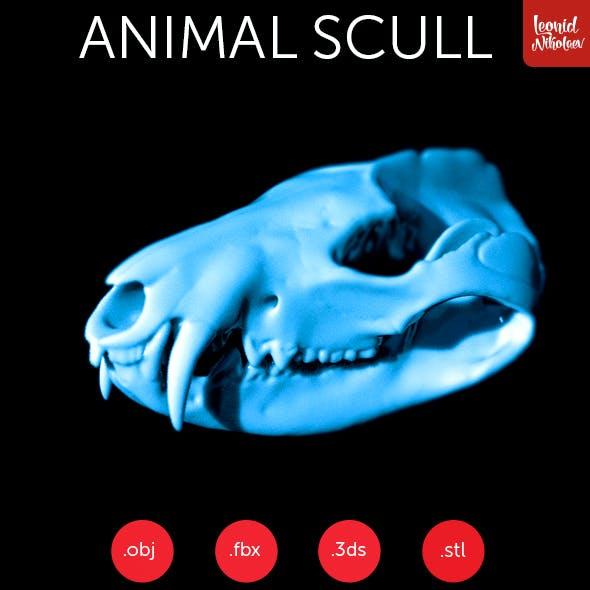 Animal 3d scull