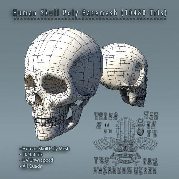 Human Skull Polygon Mesh V1.0