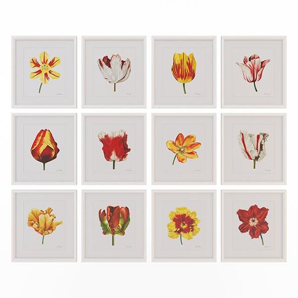 Charlotte Morgan Watercolour Tulips