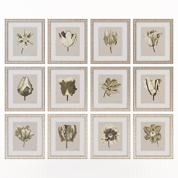 Charlotte Morgan Watercolour Tulips Sepia - 3DOcean Item for Sale